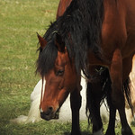 Teton - Stallion thumbnail