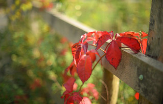 Red Hot Fence...  HFF