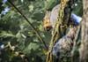 """Don't bug me.  Can't you see I'm eating?"" (Paul B0udreau) Tags: blort canada ontario niagara paulboudreauphotography nikon nikond5100 photoshop nikkor70300mm layer squirrel nature tree morning stcatharines"