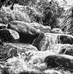 Una quebrada (Felipe Cárdenas-Támara) Tags: rolleiflexautomat6x6modelk4a rolleiflexjune1951march1954 rolleiflextlr quebrada agua felipecárdenastámara felipecárdenastàmara felipecardenasphotography