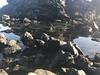 (jenschuetz) Tags: ocean water beach coast westcoast california bayarea marincounty mttam nationalpark outdoors outside nature landscape sanfrancisco