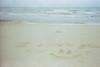 (zulkhairi kharuddin) Tags: mju mjuii olympusmjuii μmjuii film malaysia surf surfer beach skimboard kuantan kodak gold 200
