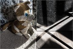 I - Wolfi Wolf - mark with a cross of light and shadow the center of Enea Maemü, my home! (WolfiWolf-presents-WolfiWolf) Tags: wolfiwolf wolfi wolf eyes eneamaemü enea er derprächtigste mirror schöpfung cross kreuz light licht lupuslupus lupus lichtschatten blue blau butlers augen conductor dirigent dirigat dirigierendster fuddlers g glück huldvoll he i jazzinbaggies multiversen multiverses majestic multiverse universum öhrchen quanten reise tanz ufo universe vollmond heimat home x