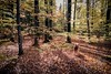 Forest Love - Nokia 6 (Andreas Voegele) Tags: nokia nokia6 smartphone mobilephone handy light forest search andreasvoegelephoto landscape airedaleterrier forestlove