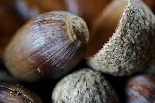 Acorns And Shells