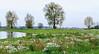 Bei Alphen an der Maas (antje whv) Tags: holland niederlande netherlands maas fluss flusslandschaft river riverlandscape alphen