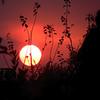 Noche de brujas...Halloween (nuska2008) Tags: nuska2008 nanebotas halloween nochedebrujas atardecer sunset ocaso sol ramas sun olympussz30mr gijón siluetas flickr tramonto