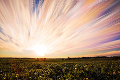 Abundance (Matt Molloy) Tags: mattmolloy timelapse photography timestack photostack movement motion sunset colourful sky clouds trails lines sun light corn field crops trees seeleysbay ontario canada landscape nature countryside lovelife