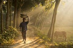Winter Bangladesh (Topu Saha) Tags: cow field people nature landscapes sunrise trees sunray morning winter sarishabari jamalpur bangladesh nikon walk green grass outdoor monochrome topusaha fog foggy mist misty rays