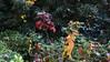 I COLORI DELLA NATURA. (Salvatore Lo Faro) Tags: nature natura piante foglie autunno verde rosso giallo colori vegetazione salvatore lofaro nikon 7200