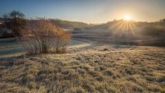 Frosty sunrise (Sebo23) Tags: sunrise sun sunbeams sonnenaufgang sonnenstrahlen gegenlicht light lichtstimmung autumn güttingen herbst hersbstimmung frozen landscape landschaft landschaftsaufnahme nature natur canon6d canon16354l