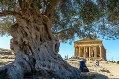 _SIZ6267.jpg (m.dehnell) Tags: 2017 italien d800 tropea küste dehnell agrigento sicilia it valledeitemplidiagrigento valleyoftempleinagrigent