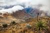 QuarryTrail walk, Machu Picchu (Bezzzman) Tags: peru quarry trail machu picchu south america