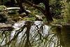 Treeflection (Padmacara) Tags: australia sydney chinesegardenoffriendship nature g11 tree water bridge reflection