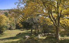 La clairière (mrieffly) Tags: hautesvosges hautrhin alsace valléedeladoller neuberg canoneos50d