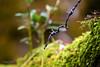 """ frutti di bosco "" (swaily ◘ Claudio Parente) Tags: natura macro closeup bosco nikon d500 swaily claudioparente"