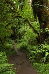 A Walk in the Woods (gwiwer) Tags: hallofmosses washington washingtonpeninsula olympicnp rainforest regenwald ferns farne