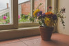 IMG_9103 (J. Adams.) Tags: bokeh flowers petal petals stem leaf leaves dying plant plantpot pot jar glass glassjar window windowsill garden nature relax relaxing chill chilled mindful canon dslr eos 650d 24mm pancake lens sunlight shadows shadow greenhouse sky bright eve evening fade faded aesthetic pretty