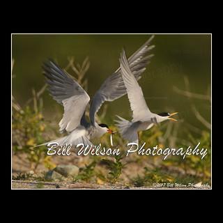 tern issues