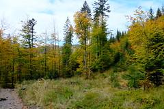 DSCF4652 (Jakub Lewandowski) Tags: beskidy babia góra mountains poland polska jesień automn