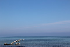 Corse (cindyrib) Tags: plage bois arbre bleu vacances mer