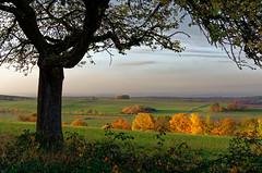 Herbst 2015 (Foto Dirk Schermuly) Tags: herbst nikon d7100 laubustal limburgweilburg dxo natur outdoors landschaft