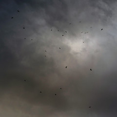 """Sky Call"" (helmet13) Tags: d800e raw sky clouds bird crow nature autumn fall aoi peaceaward world100f"