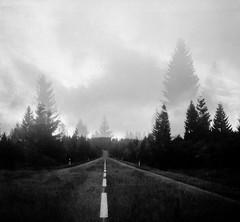 inbetween sky & land (rabbit hole) (--pam--) Tags: fokaflex analogue film black white bw 6x6 medium format square nature landscape woods road travel forest winter czech
