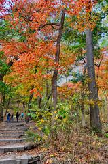 Autumn Color Along the Trail (kendoman26) Tags: hdr nikhdrefexpro2 niksoftware nikon starvedrock starvedrockstatepark travelillinois enjoyillinois nikond7100 tokinaatx1228prodx tokina tokina1228 autumn autumncolors fall fallcolors