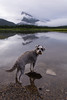 Banff National Park (Following Keaton) Tags: vermilionlakes dog lake landscape nature schnauzer wilderness