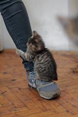 cat (Ivana Patarchic) Tags: pet cat sport shoe animals girl serbia b belgrade babycat