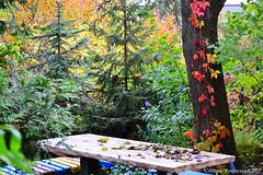 DSC_0934 (small) (zahidniak) Tags: ternopil autumn taraskokovsky beauty amazingnature ukraine