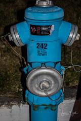 IMG_9212 (Islandsmjoll.is) Tags: 2017 akureyrakirkja akureyrískpylsa bautinn iceland island akureyri brunahani church islandsmjoll kirkja listaverk lundi neongrænnbíll norðuland puffin pylsa svartfugl wwwicelandicmysteryis