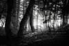 Forest (DA.S.) Tags: panasonic lx100 parnitha greece mountain mist forest