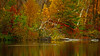 Autumn Loon'a See (Bob's Digital Eye) Tags: 2017 autumn autumncolourorcolorduh autumnleaves birds bobsdigitaleye canon canonefs55250mmf456isstm fallcolor flicker flickr forest h2o lakescape lakeshore landscape loons red reflections t3i trees water waterfowlofnorthamerica