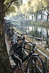 bike@Kö, Düsseldorf 8 (Amselchen) Tags: bicycle kö düsseldorf germany season autumn fall autumncolours trees canal moat water reflection bokeh blur dof depthoffield fujifilm fujifilmxseries fujinon xt2 fujifilmxt2 xf35mmf14r