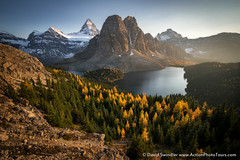 Enchanting Light (David Swindler (ActionPhotoTours.com)) Tags: autumn ceruleanlake color assiniboine mountassiniboine canada larch fall mtassiniboine britishcolumbia
