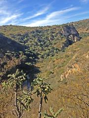 27MEX16025_Xotolar_creek (mic_hamelin) Tags: mexique xotolar 2016 canyon