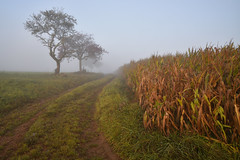 Ambiance d'automne (Excalibur67) Tags: nikon d750 sigma globalvision paysage landscape nature brume brouillard mist fog campagne arbres trees 24105f4dgoshsma