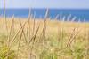 above the dunes (jimmy_racoon) Tags: 70200 f4l is canon 5d mk2 cape cod national seashore massachusetts grasslands landscape nature ocean 70200f4lis canon5dmk2 capecodnationalseashore capecod