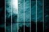 sky in cage (N.sino) Tags: m9 summilux50mm sky greenhouse shinjuku shinjukugyoen reflection 空 温室 新宿御苑 秋の空 檻の中の空 映り込み 新宿