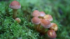 Dans les sous bois ... (passionpapillon) Tags: macro champignons bois mousse passionpapillon 2017