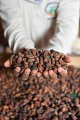 NP_Cacao_Guaviare38