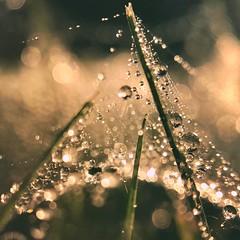 Perfect hiding place (jilllian2) Tags: morninglight waterdrops green dewdrops nature iphone olloclip macro iphone7plus