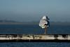 time to wonder (e-box 65) Tags: seagull sea morning bremerhaven bird nikon d7200 18 105 shore leg möwe meer weser northsea nordsee dyke