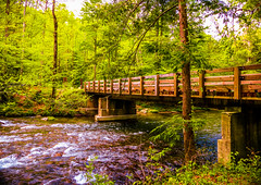 """Bridge Over Rushing Waters"" Great Smoky Mountains National Park (Cathy Lorraine) Tags: outdoors nature bridge river greatsmokymountainsnationalpark northcarolina tennessee mountains water forest woods trees park springtime appalachian america nationalpark beauty tranquility coth5"