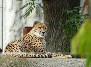 Basel Zoo (
