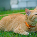 Joey the garden kitteh 😺