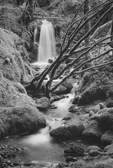 Secret Waterfall (ShinyPhotoScotland) Tags: scotland waterfall equipment argyll nature water inverary camera dubhloch pentaxk1 cascade art places photography unitedkingdom gbr rockstone monochrome flora blackandwhite trees toned boulder