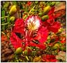 Cores da natureza. #naturalbeauty #natureza #naturephotography  #jardimdoeden #revistaxapury #eunotg #criacaodedeus #obradivina #motox2 #instamotox2 #horizonte #infinito #sky #ceuazul #ceulindo #ceu #nature #verdes #verdescampos #paisagem #paisagens #ciel (ederrabello2014) Tags: naturalbeauty infinito naturephotography motox2 intagrambrasil ceulindo naturezalinda naturezaperfeita nature naturezabela revistaxapury instagran horizonte eunotg verdes instamotox2 ceuazul cieloazul sky jardimdoeden natureza paisagem cielo verdescampos ceu criacaodedeus obradivina paisagens